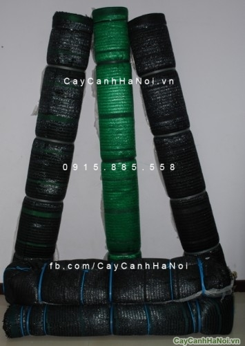 luoi-che-nang-355×500