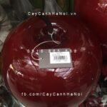 Trái cây composite iPot hình táo lạ mắt  IP-00168