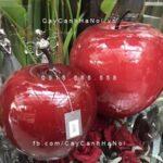 Trái cây composite iPot hình trái táo| IP-00166