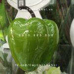 Trái cây composite iPot ớt chuông| IP-00169