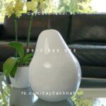 Trái cây composite iPot hình quả lê| IP-00175