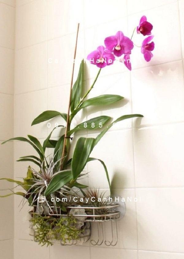 Một chậu lan được treo trong phòng tắm giúp không gian hòa hợp với thiên nhiên