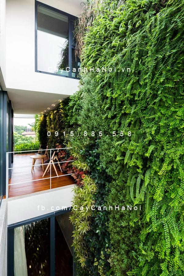 VƯờn tường cây xanh nhà anh Phương VƯờn tường cây xanh nhà anh Phương