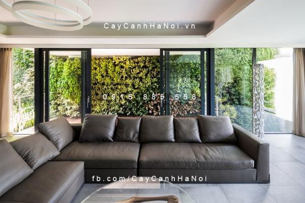 Vườn tường cây xanh bao quanh phòng khách