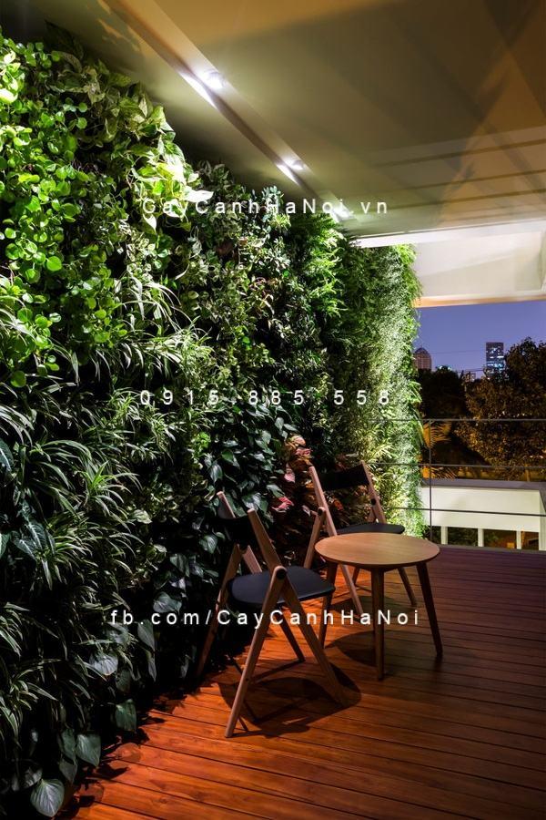Bộ bàn ghế đặt bên cạnh vườn tường cây xanh