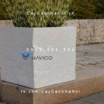Chậu cây cảnh composite Havico vuông| HVC-00022