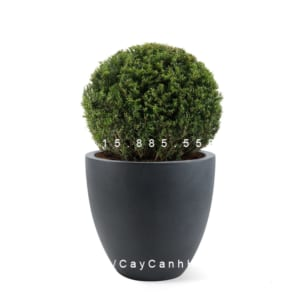 Chậu cây composite Havico Luca cao cấp| CB-321