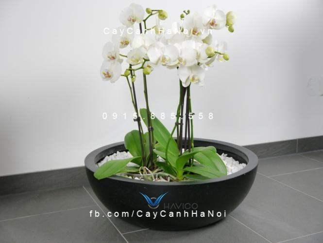 chau-composite-cay-canh-havico-tapi-tron-c-313 (4)