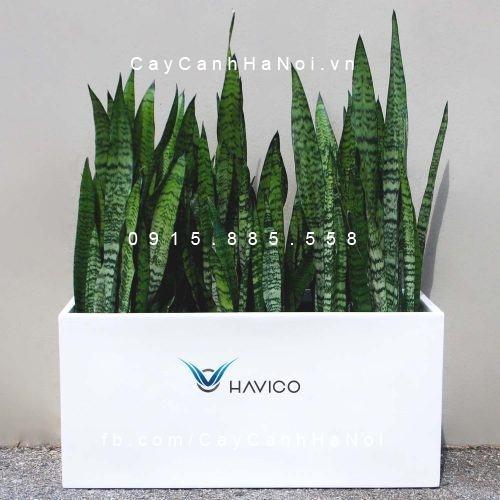 Chậu composite Havico Visio hình chữ nhật| C-319