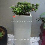 Chậu nhựa trồng cây composite Havico Lazy| HVC-00038