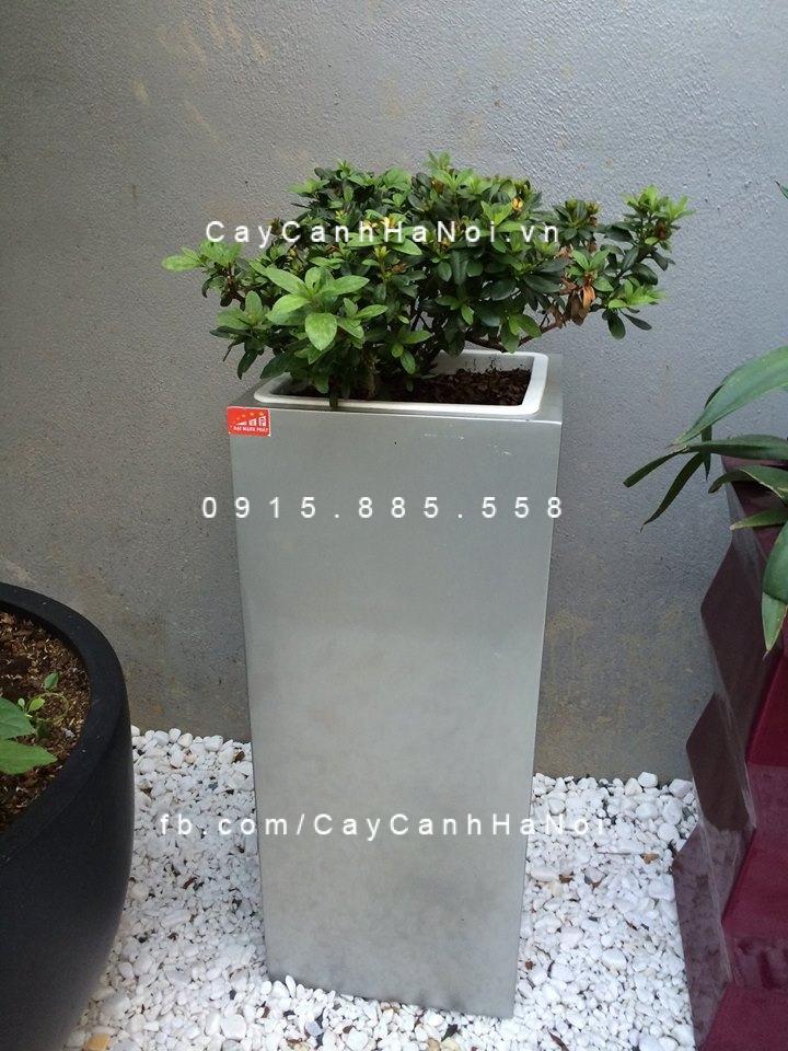 chau-nhua-trong-cay-composite-havico-lazy-hvc-00038