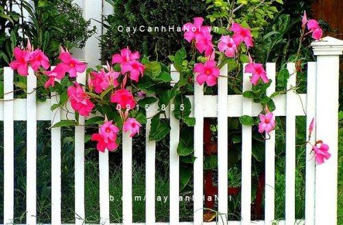 các loại hoa dễ trồng vào mùa hè