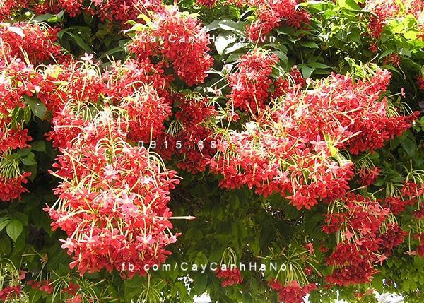 Các loại cây trồng chịu hạn cho khu vườn mùa hè (1)