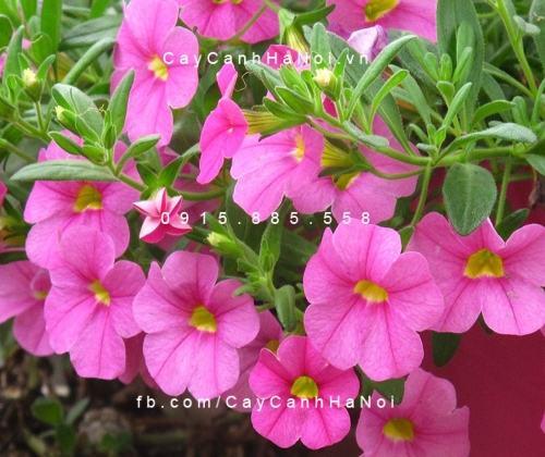 hoa gì trồng vào mùa hè