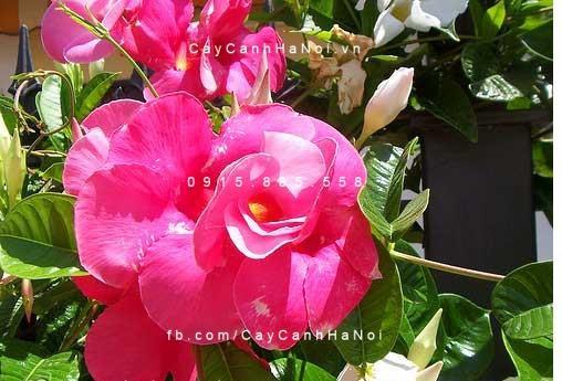 Mùa hè nên trồng hoa gì cho khu vườn mát mẻ hơn? (3)