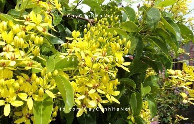 Top các loại cây cảnh chịu nắng hạn mà bạn có thể thích (3)