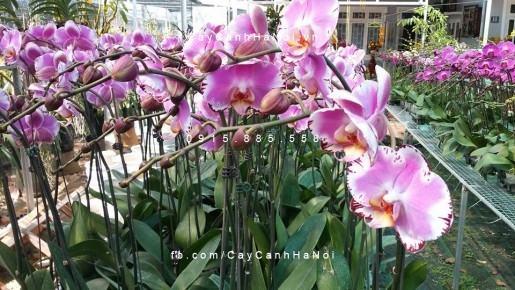Vườn hoa lan hồ điệp