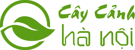 Logo Công ty Cây cảnh Hà Nội