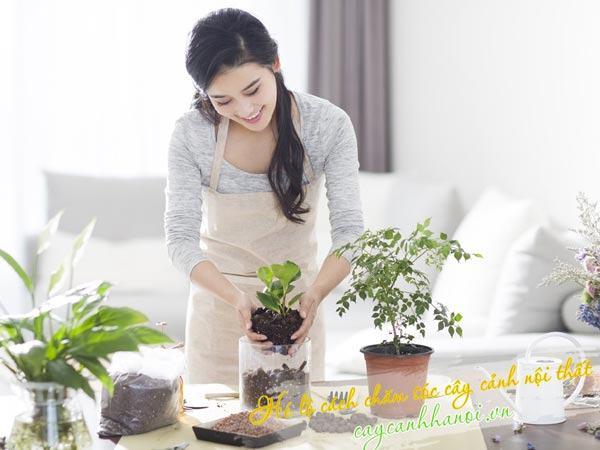 Bón phân thay chậu cung cấp các chất dinh dưỡng cho cây