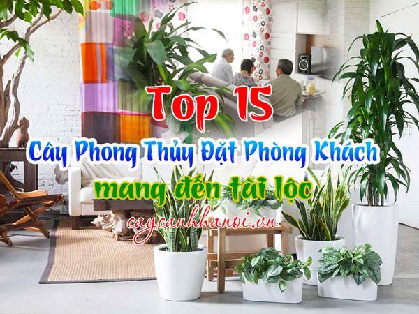 Top 15 loại cây phong thủy đặt phòng khách