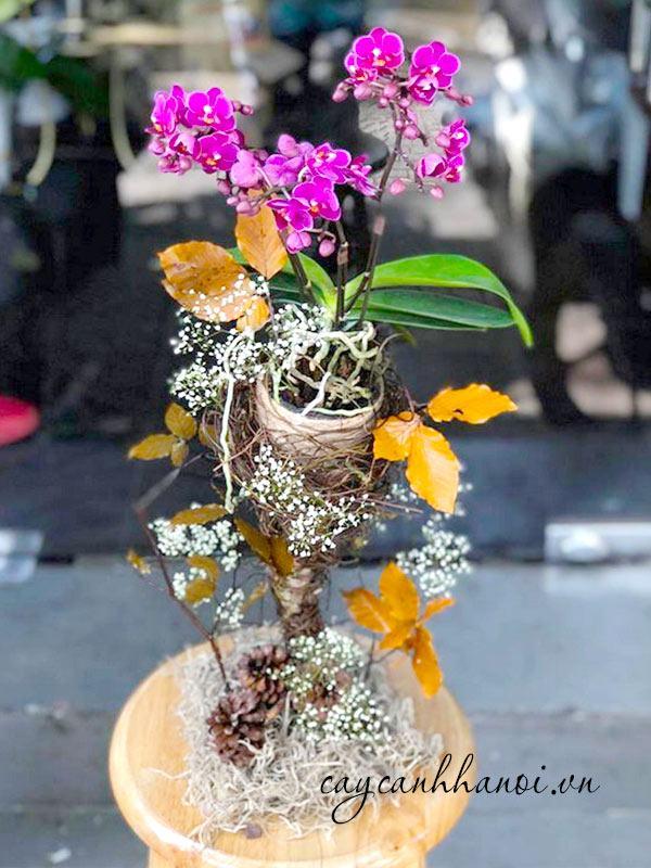 Hoa lan tím tặng vợ ngày 20-10