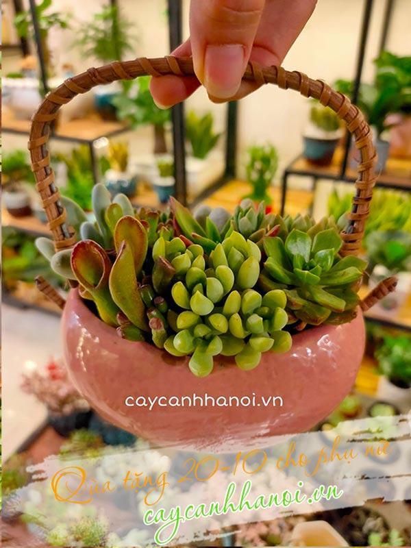 Hoa sen đá quà tặng 20-10