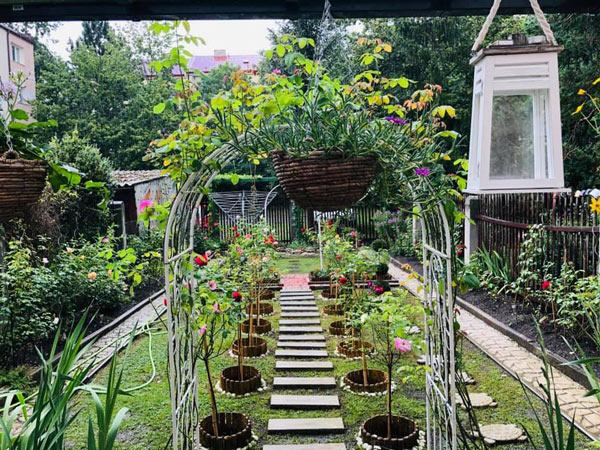 Trồng cây dây leo cho sân vườn