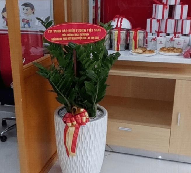 cây cảnh chúc mừng