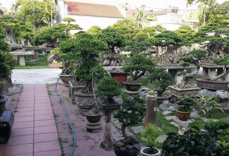 cây cảnh chúc tết