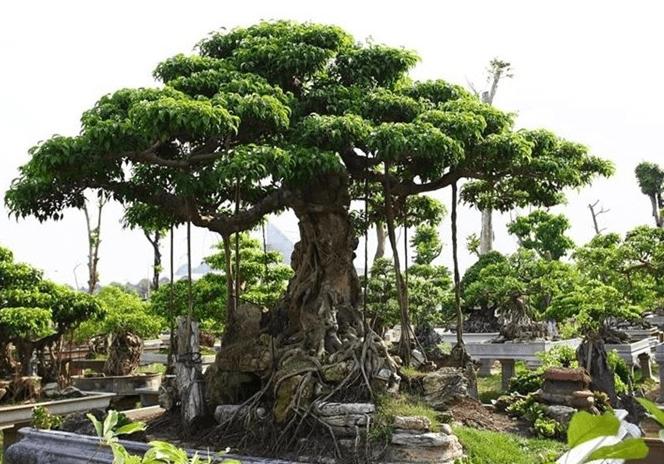 cây xanh quý hiếm