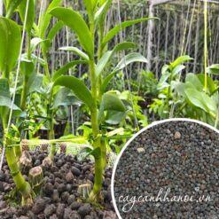 Phân dê hữu cơ dùng để trồng lan