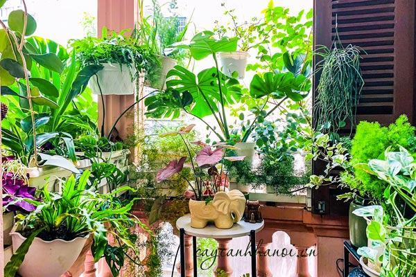 Ban công đẹp với các loại cây kiểng lá trồng chậu
