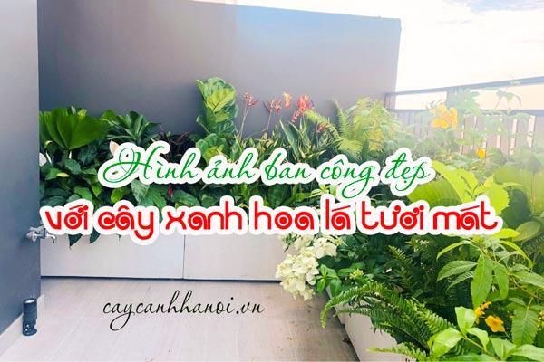 Tổng hợp hình ảnh ban công đẹp với cây xanh hoa lá