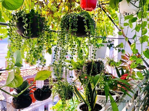 Trang trí ban công bàng hoa cây cảnh chậu treo
