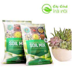 Giá thể Soil Mix dất trộn sẵn trồng sen đá, xương rồng