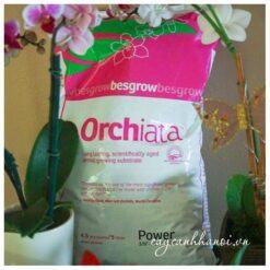 Vỏ thông Orchiata nhập khẩu New Zealand