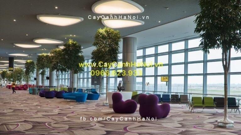 Cây Hạnh Phúc ở Sân bay Changi, Singapore