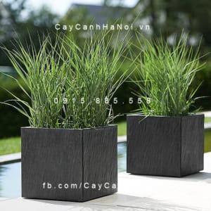 Chậu cây cảnh composite Esteras Clare vuông thấp