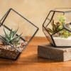 Tiểu cảnh để bàn terrarium